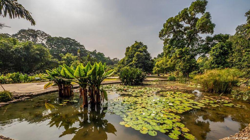Kebun Raya Indonesia, Posisi Strategis dan Ancaman Kepunahan di Dalamnya