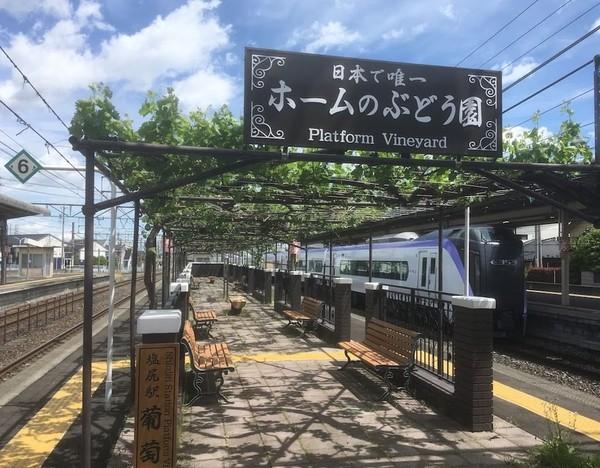 Tahun lalu, acara ini dilaksanakan pada 7-27 September. Untuk tahun ini, penyelenggaraan acara itu belum dapat dipastikan karena pandemi Corona masih terjadi. (Foto: Instagram @shiojiritokimeguri)