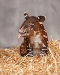 Foto bayi hewan yang lucu-lucu ini siap untuk menghibur kebosanan kamu. Mana foto yang paling gemesin?