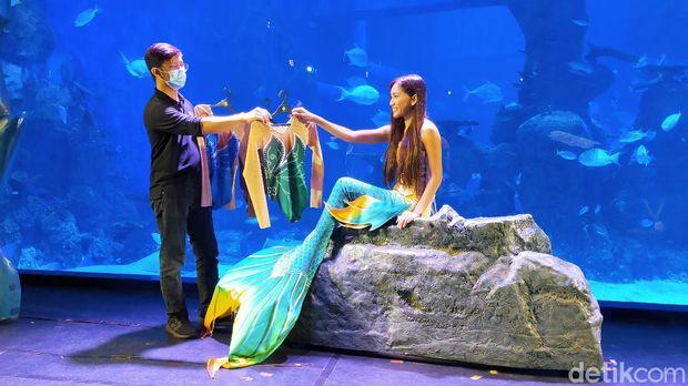 Mermaid di Jakarta Aquarium