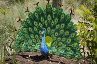 Salah satunya adalah dengan menampilkan instalasi puluhan hewan yang dibangun dari LEGO. (San Antonio Zoo)