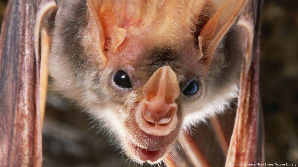 Waspada Munculnya Penyakit-penyakit Zoonosis Jenis Baru