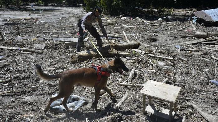 Proses pencarian korban banjir bandang di kawasan Luwu Utara terus dilakukan. Petugas kepolisian pun kerahkan 2 anjing pelacak untuk bantu cari korban banjir.