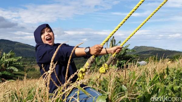 Tempat ini bisa menjadi lokasi edukasi khususnya pada tanaman jagung, mulai dari tanam, tumbuh, petik, hingga diolah menjadi aneka macam kuliner, seperti jagung bakar, rebus, dan goreng. (Hasrul Nawir/detikcom)