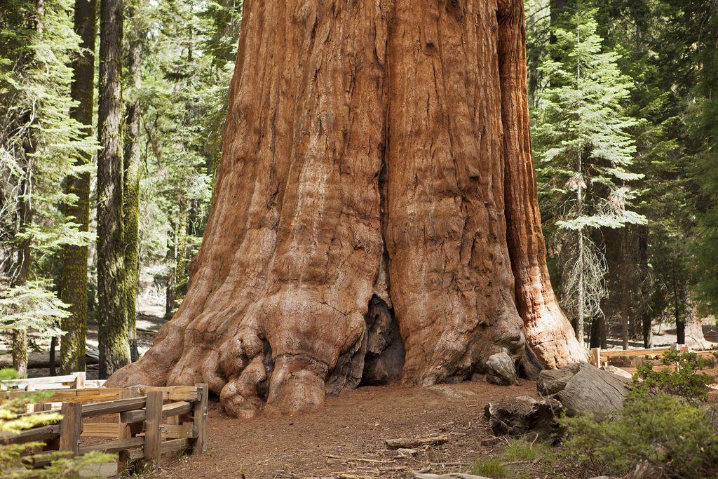 Pohon cantik nan unik