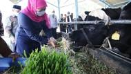Industri Susu di Jatim Masih Mampu Tumbuh dan Bertahan di Masa Pandemi