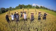 Bareng Bima Arya, Luna Maya Panen Padi hingga Makan Jengkol di Bogor