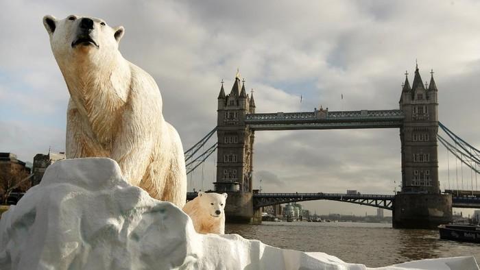 Perubahan iklim berdampak pada ancaman kepunahan bagi beruang kutub. Hewan karnivora itu dibayangi ancaman kepunahan pada 2100 imbas es yang kian susut di kutub