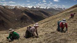 China Perluas Program Kerja Massal di Tibet, Mirip di Xinjiang