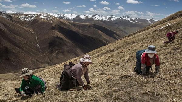 Daerah Tibet memiliki suhu cukup rendah karena berada di pegunungan es, penduduk lokal mengandalkan kebutuhan hidup dari hutan dan sungai. Kevin Frayer/Getty Images