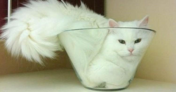 kucing lucu elastis