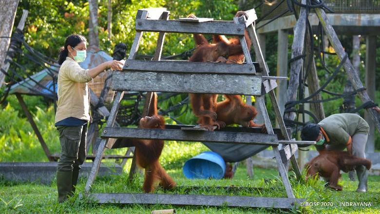Minamas Plantation serahkan bantuan ke Pusat Perlindungan dan Rehabilitasi Orangutan Borneo Orangutan Survival Foundation. Hal itu dilakukan guna cegah COVID-19