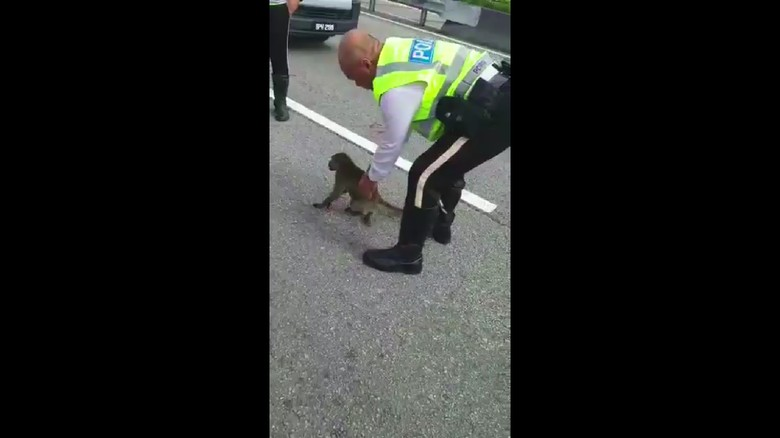 Salut, Polisi Malaysia Ini Selamatkan Monyet yang Terluka