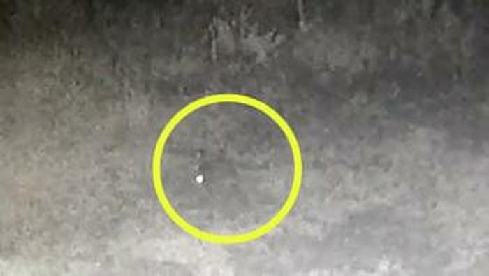 Screenshot CCTV diduga hewan penyerang ternak di Taput (dok. Istimewa)