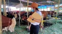 Suka Duka SPG Hewan Kurban di Surabaya