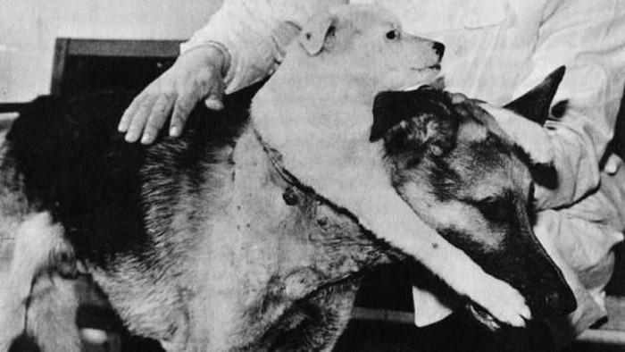 Anjing berkepala dua.