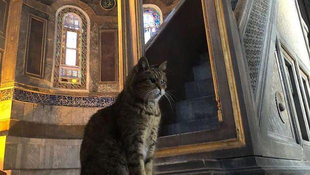 Kucing Hagia Sophia