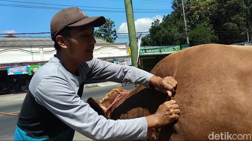 Pedagang Hewan Kurban di Kendari Keluhkan Penjualan Turun