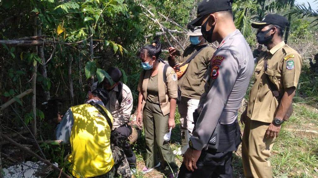 11 Kambing Warga Diduga Dimangsa Harimau, BKSDA Bengkulu Pasang Perangkap