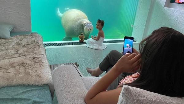 Untuk resor dengan pemandangan walrus akan terletak di bawah air. (Pairi Diza Resort)