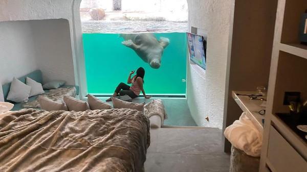 Wisatawan bisa melihat aktifitas walrus dan juga berinteraksi dengan mereka sepanjang hari. (Pairi Diza Resort)