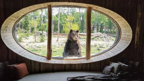 Ada bermacam-macam hewan yang ditawarkan, yaitu serigala, beruang, singa laut, rusa bera, penguin, harimau siberia dan beruang kutub. (Pairi Diza Resort)
