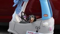 Gemasnya Anjing yang Punya SIM Ini