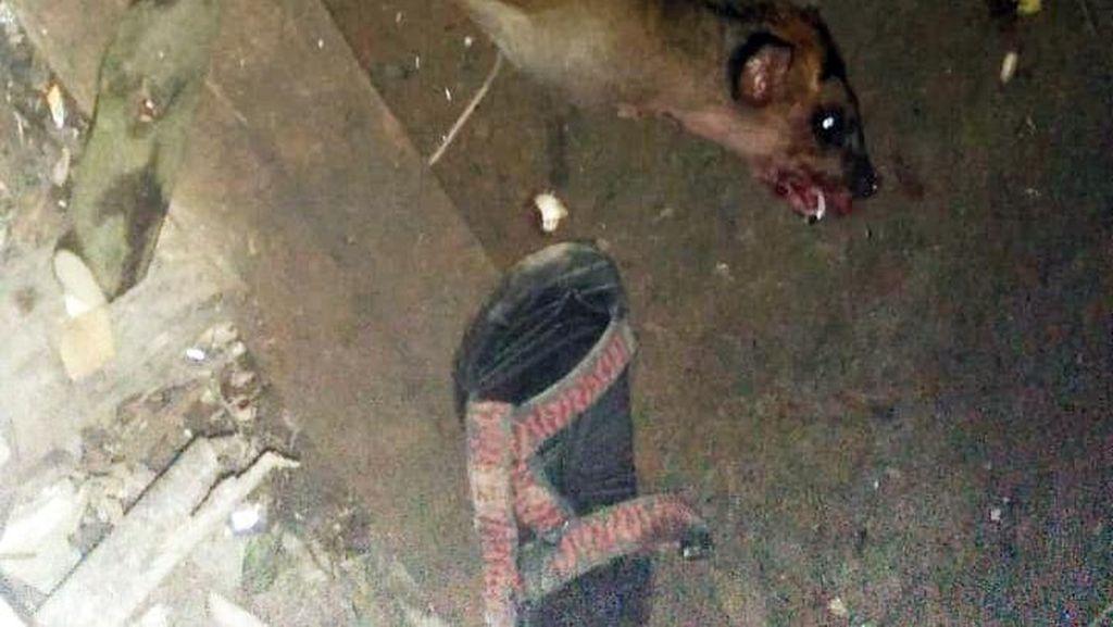 Pemburu di Sanggabuana Juga Tembak Mati Rusa dan Owa Jawa