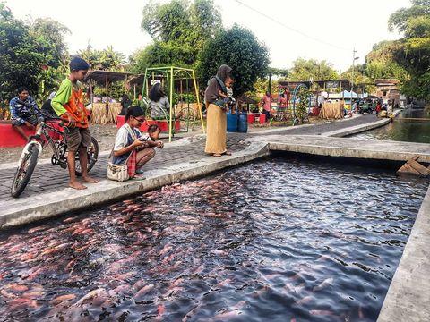 budidaya ikan di saluran irigasi