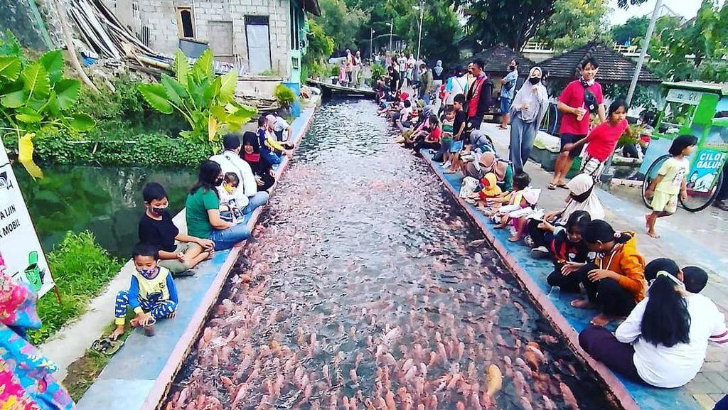 Saluran Irigasi Jadi Kolam Ikan hingga Tips Kecilkan Perut Buncit