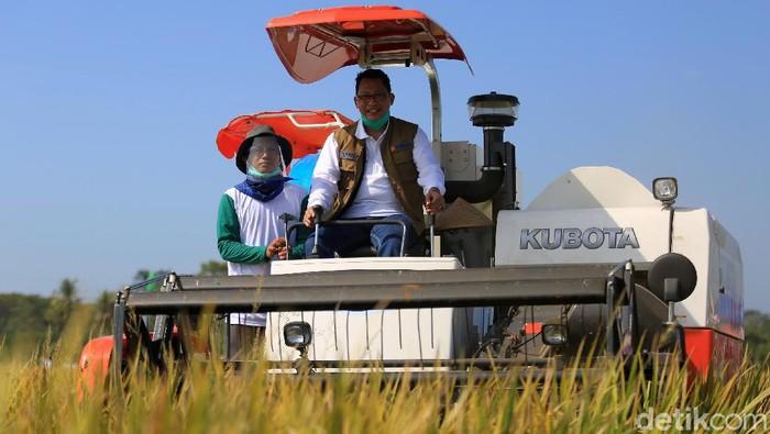 Direktur Utama Perum Bulog Budi Waseso mengendarai traktor pemotong tanaman padi saat panen raya di Desa Rancaseneng, Kecamatan Cikeusik, Pandeglang, Banten, Selasa (28/7/2020).