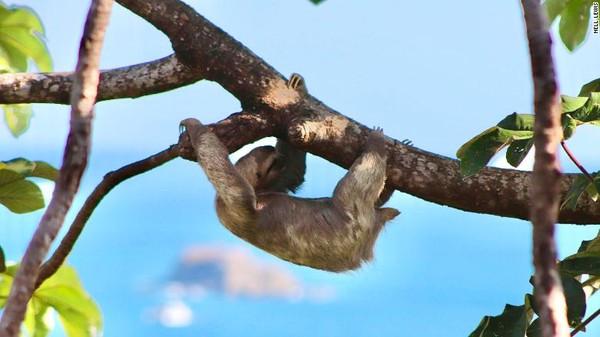 Kosta Rika jadi satu negara yang sudah sadar akan pentingnya hutan.Kosta Rika adalah negara tropis pertama yang menghentikan pembalakan liar atau laju deforestasi.