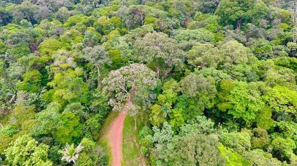 Saat ini hampir 60% lahan Kosta Rika telah menjadi hutan kembali. Hutan yang lebat telah menyelimuti pegunungan, berbaris di pantai selatan dan hutan kering menyapu timur laut negara itu. Lanskap ini adalah rumah bagi sekitar setengah juta spesies tanaman dan hewan.