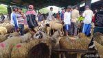 Jelang Idul Adha, Pasar Hewan Muntilan Ramai