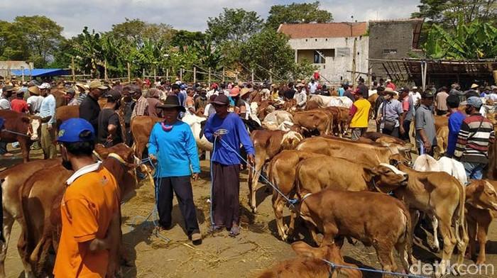 Suasana di Pasar Hewan Muntilan, Kab. Magelang, ramai menjelang Idul Adha. Tak sedikit pengunjung yang datang ke pasar tersebut untuk membeli hewan kurban.