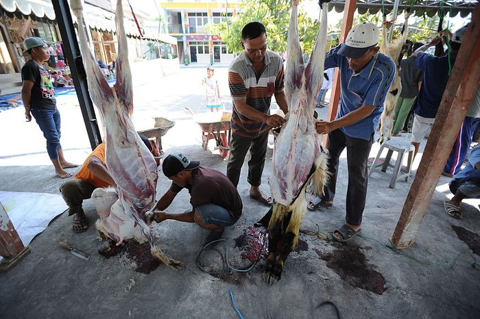 YOGYAKARTA, INDONESIA - SEPTEMBER 12:  An Indonesian Muslim prepares a cow for slaughter during celebrations for Eid al-Adha at Jogokaryan mosque on September 12, 2016 in Yogyakarta, Indonesia. Muslims worldwide celebrate Eid Al-Adha, to commemorate the Prophet Ibrahims readiness to sacrifice his son as a sign of his obedience to God, during which they sacrifice permissible animals, generally goats, sheep, and cows.  (Photo by Ulet Ifansasti/Getty Images)
