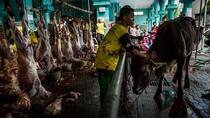 Bawang Netralkan Kolesterol? 4 Fakta di Balik Mitos-mitos Daging Kambing