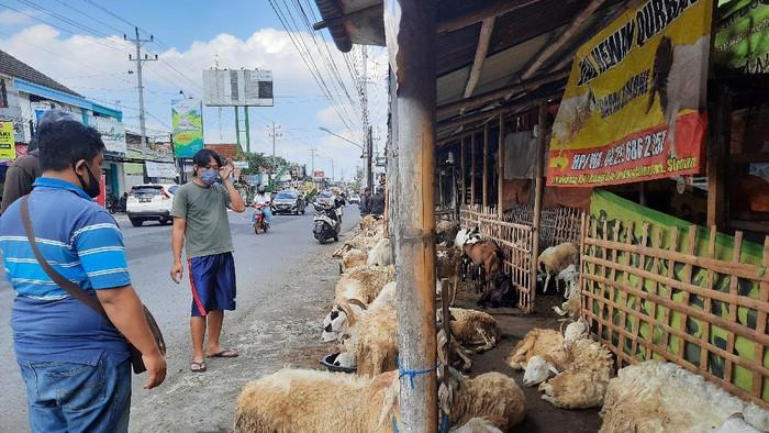 Pedagang hewan di Sleman, Yogyakarta
