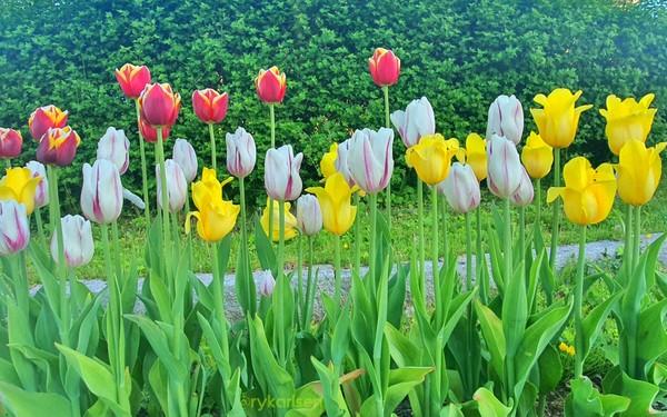 Di pinggir jalan saja bunganya tumbuh indah dan dirawat. (Ruswandi/Istimewa)