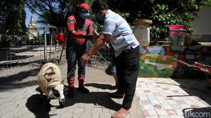 Seorang relawan mengenakan kostum superhero Spiderman bagikan hewan kurban ke sejumlah wilayah di Solo. Hewan-hewan itu nantinya akan dikurbankan saat Idul Adha
