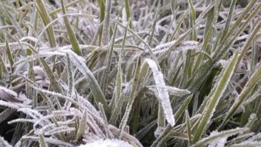 Catatan Munculnya Embun Es di Dieng Sepekan, Suhu Terdingin Hari Ini