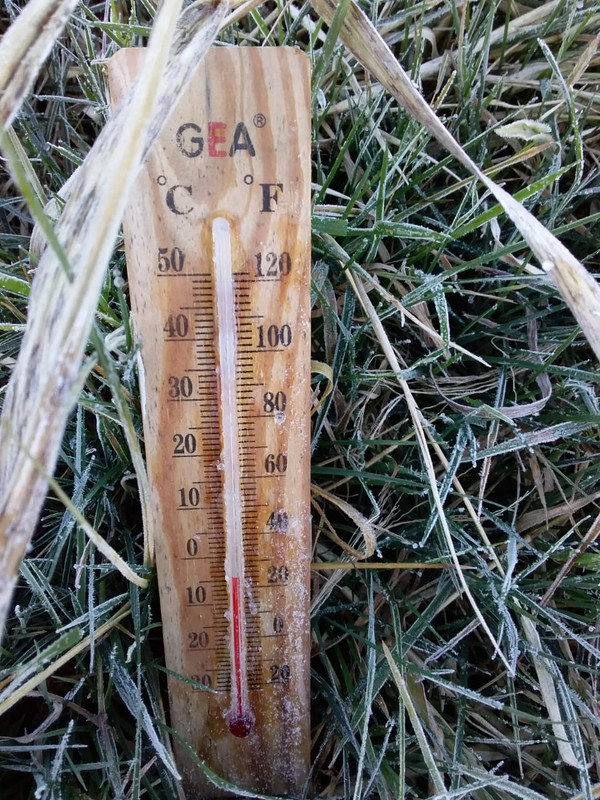 Pagi ini Dieng lebih dingin dari kemarin. Ketika diukur dengan thermometer suhunya sampai minus 4 derajat celsius. Embun es pun muncul. (dok. Istimewa)