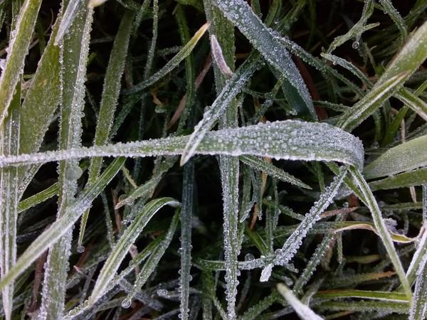 Kondisi embun es pagi ini disebut-sebut lebih tebal dibanding akhir pekan lalu. Termasuk juga di jalan menuju ke telaga Bale Kambang. (dok. Istimewa)