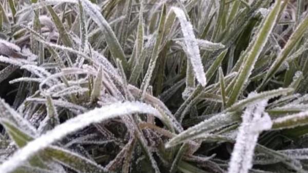 Suhu udara tersebut lebih dingin saat muncul embun es akhir pekan lalu. Di dekat Candi Arjuna suhunya bahkan sampai minus 3 derajat celcius. (dok. Istimewa)