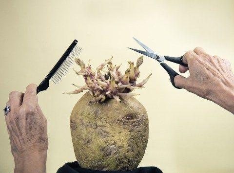 lomba foto kentang