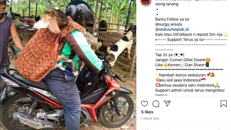Motor bawa kambing