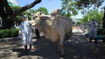 Jokowi Sumbang Kurban ke Beberapa Provinsi di Tengah Pandemi