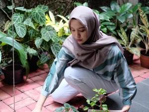 Kisah Jatuh Bangun Berkebun di Rumah: Tanaman Mati Hingga Diserang Hama