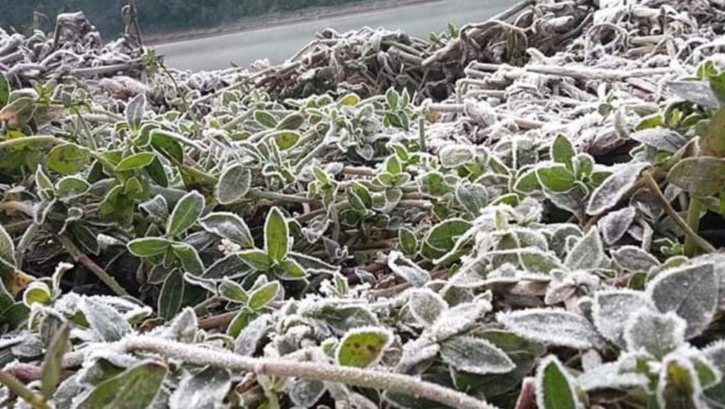 Brrrr... Suhu Minus 3 Derajat, Embun Upas Bekukan Gunung Semeru