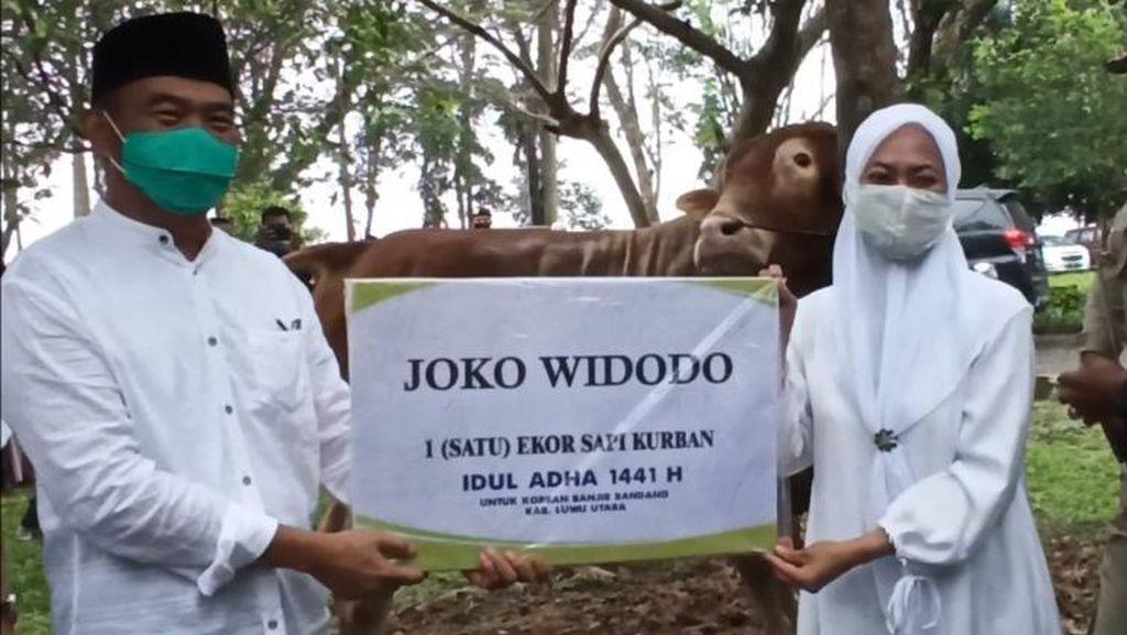 Kunjungi Pengungsi Banjir Masamba, Menko PMK Salurkan Sapi Limosin Jokowi